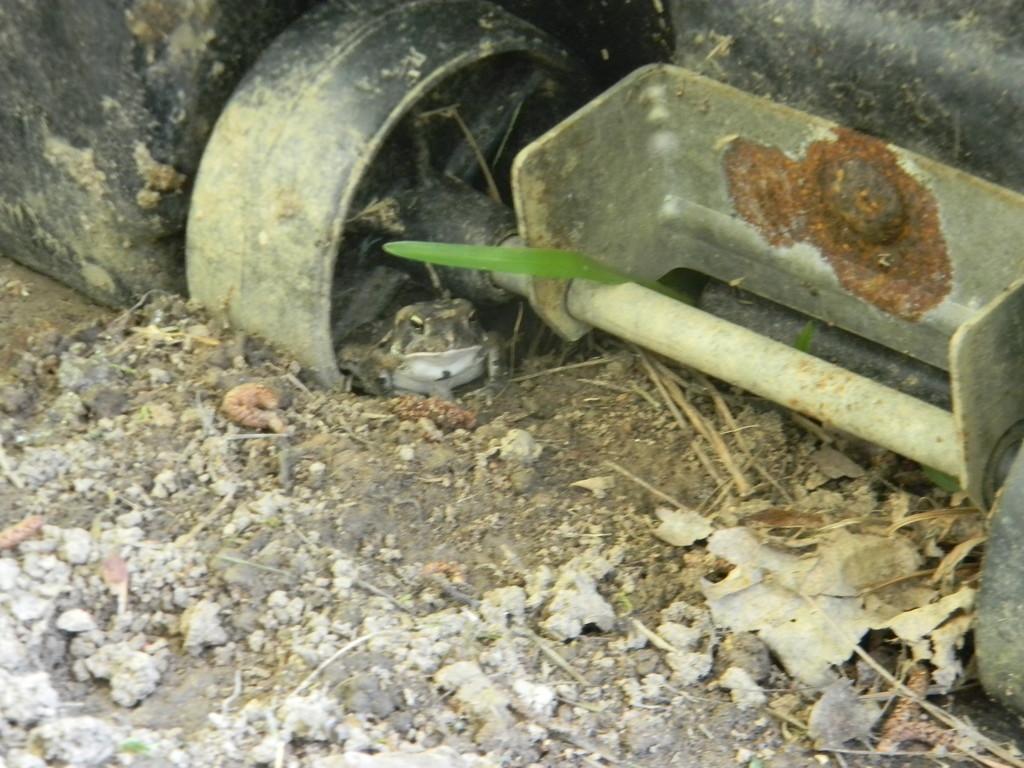 Toad Underneath Basketball Goal  by sfeldphotos