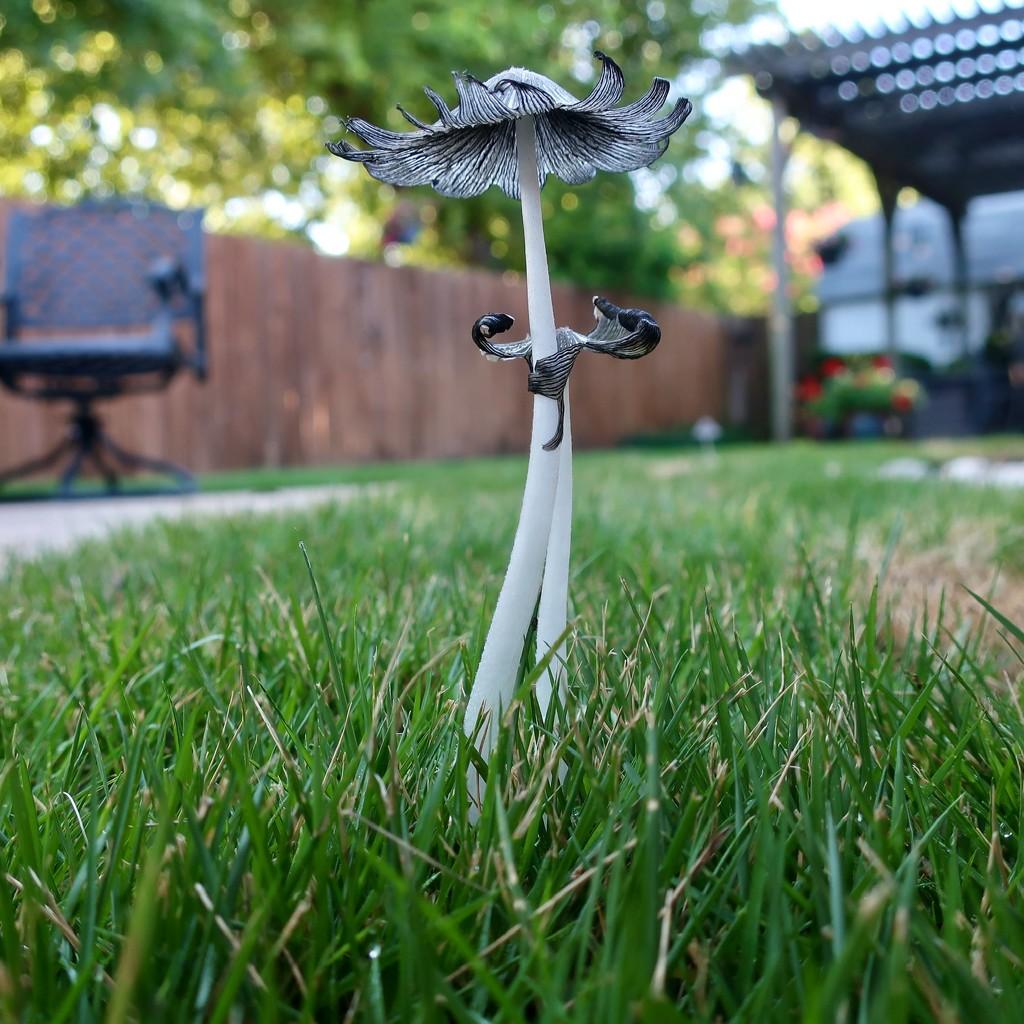 The little grey mushrooms by louannwarren