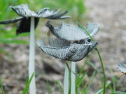 25th Jun 2020 - Surely it isnt fungi time again already???