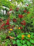 17th Jun 2020 - Garden Colours