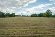 25th Jun 2020 - The field is cut and ready for raking and baling...
