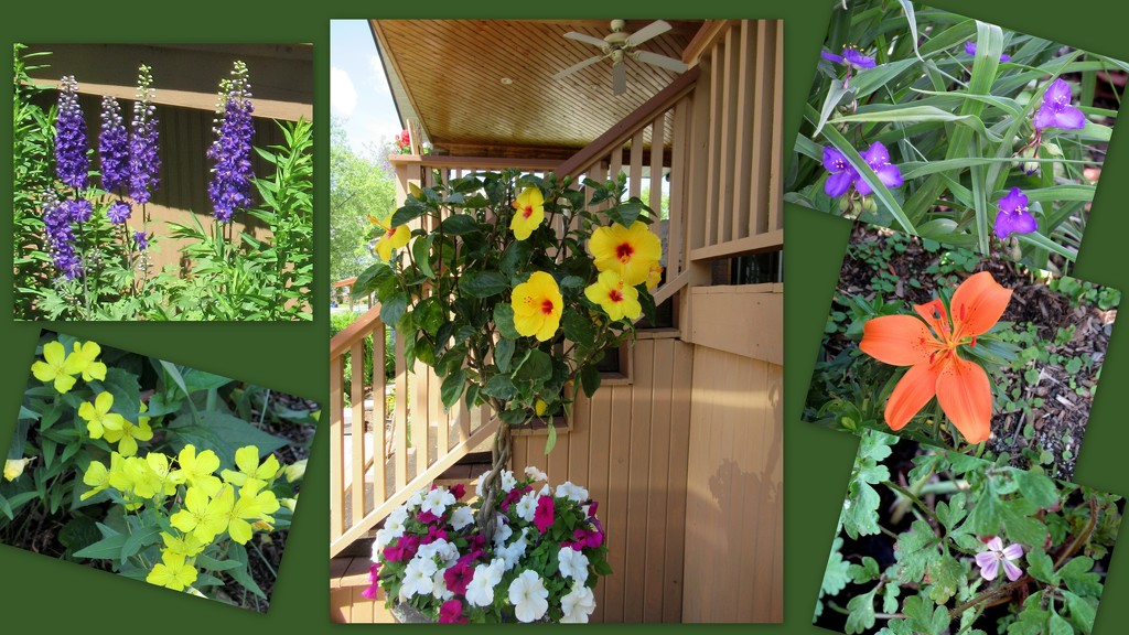 Flowers in front yard and alcove by bruni