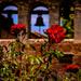 Mission Bells - Rose Adorned