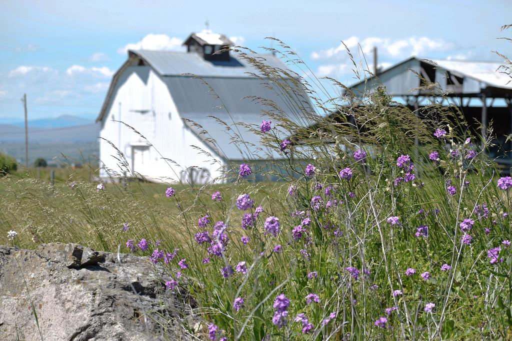 White Barn #2 by bjywamer