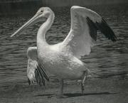 25th Jun 2020 - Big Bird of 1979