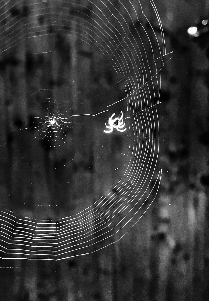 Ghost spider by pattyblue