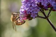 25th Jun 2020 - Bee happy