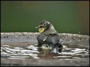 26th Jun 2020 - RK3_9585 In the bath