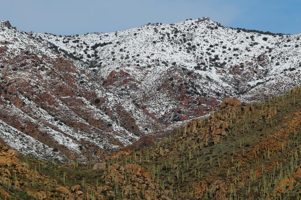 desert snow by blueberry1222