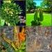 Antelope Horn Milkweed, food for butterfly royalty