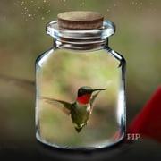 25th Jun 2020 - Hummingbird in a bottle