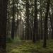 Waiuku Forest by nickspicsnz