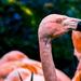 Flamingo Friday '20 18