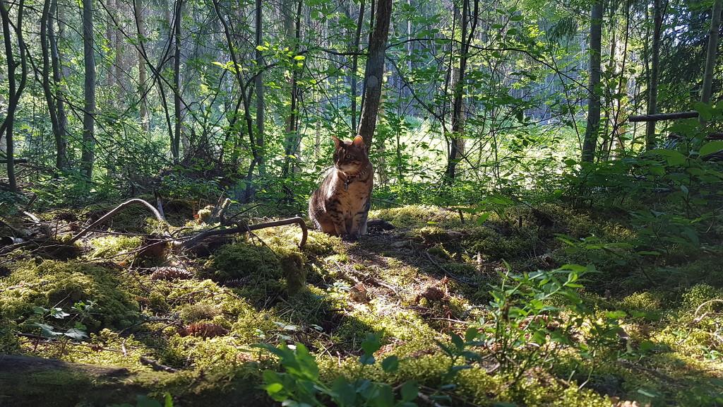 Cooling woods by katriak
