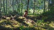 27th Jun 2020 - Cooling woods