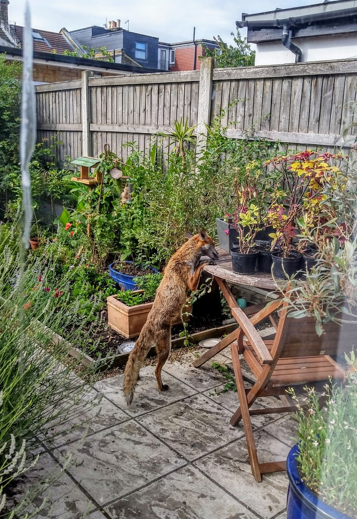 Stealing the mealworms by boxplayer
