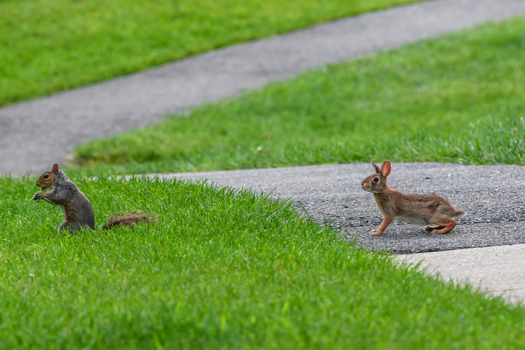 Rabbit and Squirrel Leap Frog by marylandgirl58