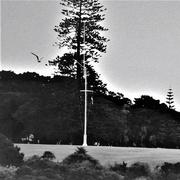 29th Jun 2020 - Waitangi