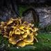 Bountiful funghi