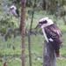 ahhh the early birds by koalagardens