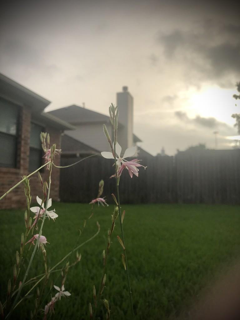 Haze over the land by kaylynn2150