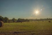 "28th Jun 2020 - ""Make hay while the sun shines""..."