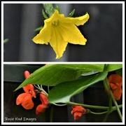 28th Jun 2020 - Vegetable flowers