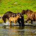 The horses splash in the water by elisasaeter