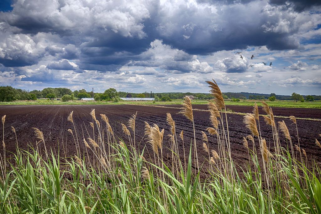 Holland Marsh Fields by pdulis