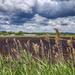 Holland Marsh Fields
