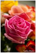 29th Jun 2020 - Paper Roses...