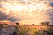 29th Jun 2020 - Magical light in the Kafue