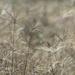 grasses in the field