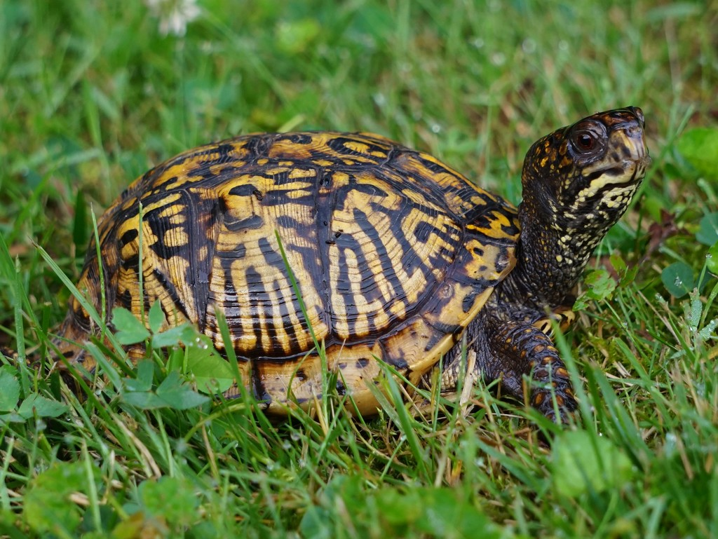 Good Morning, Turtle by tunia