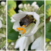 Pollination in Process