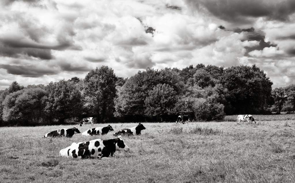 Bovine Garden Party by vignouse
