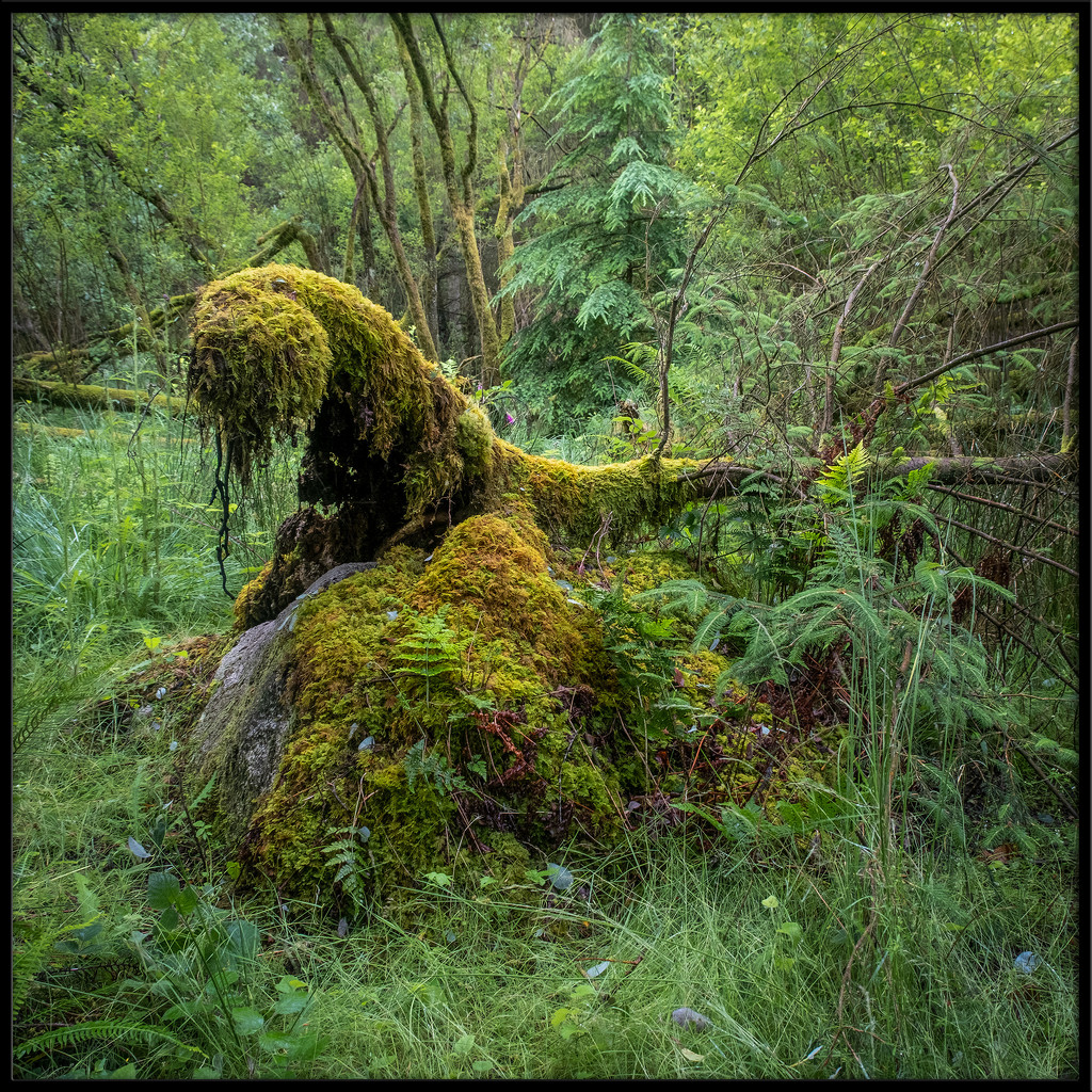 The Thing from the Swamp by ellida