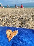 1st Jul 2020 - Hearts of shells.