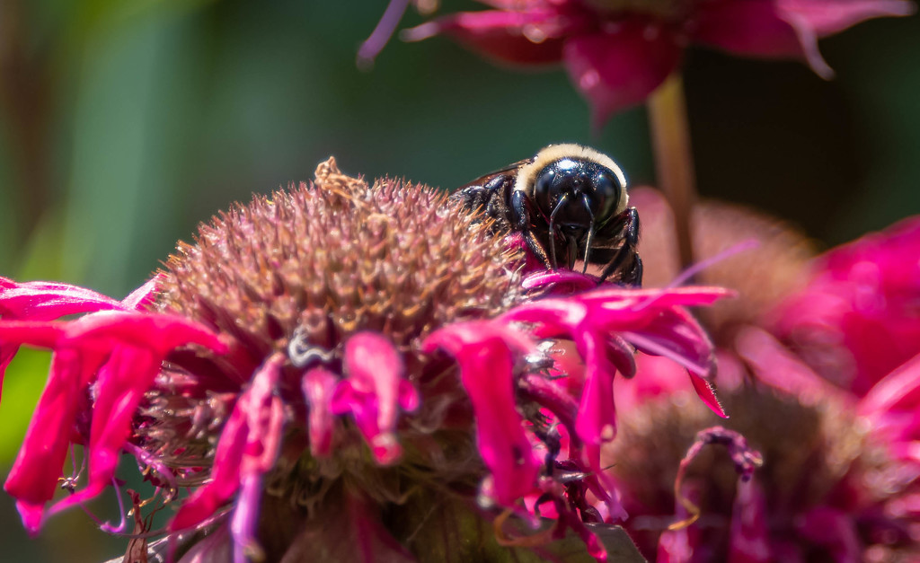 Bee, Close Up and Personal by marylandgirl58