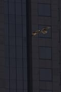 29th Jun 2020 - Urban Osprey