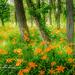 Oxbow Splendor by ggshearron