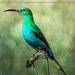 A Malachite Sunbird