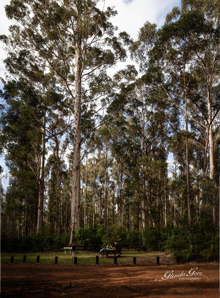 Picnic at Boorara Tree by glendamg