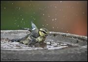 30th Jun 2020 - RK3_9984 Caught in the bath