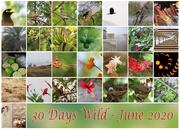 30th Jun 2020 - 30 Days Wild