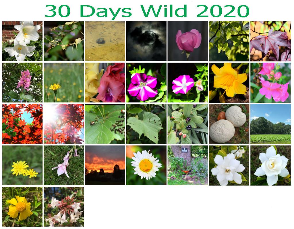 30 Days Wild 2020 by homeschoolmom
