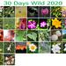 30 Days Wild 2020