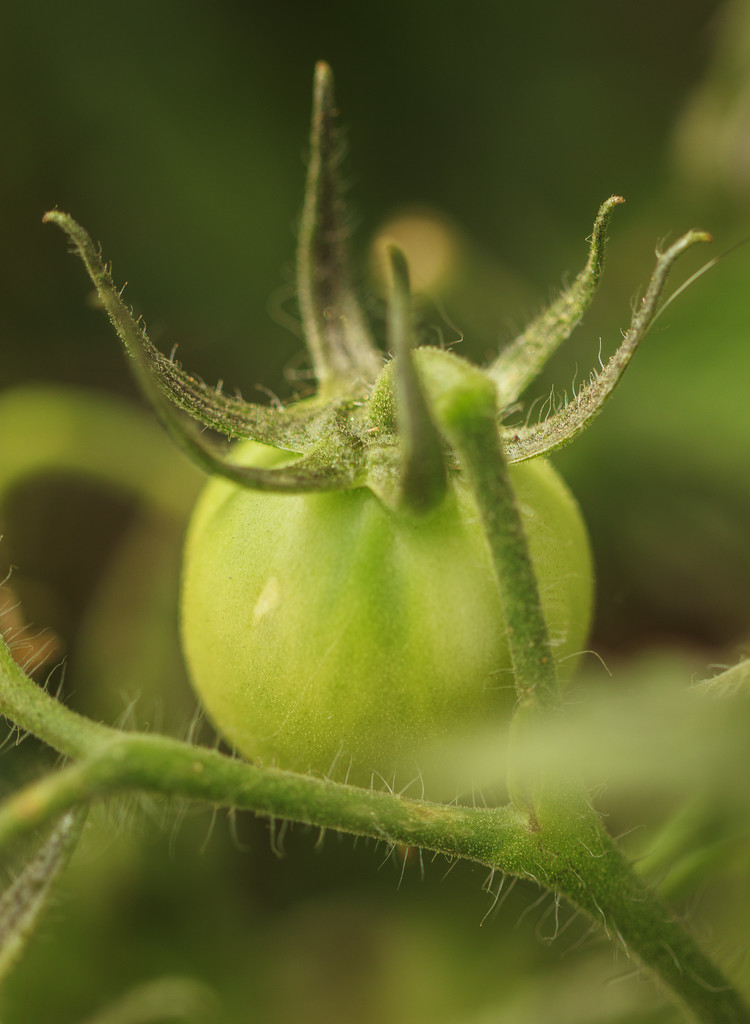 container tomato by aecasey