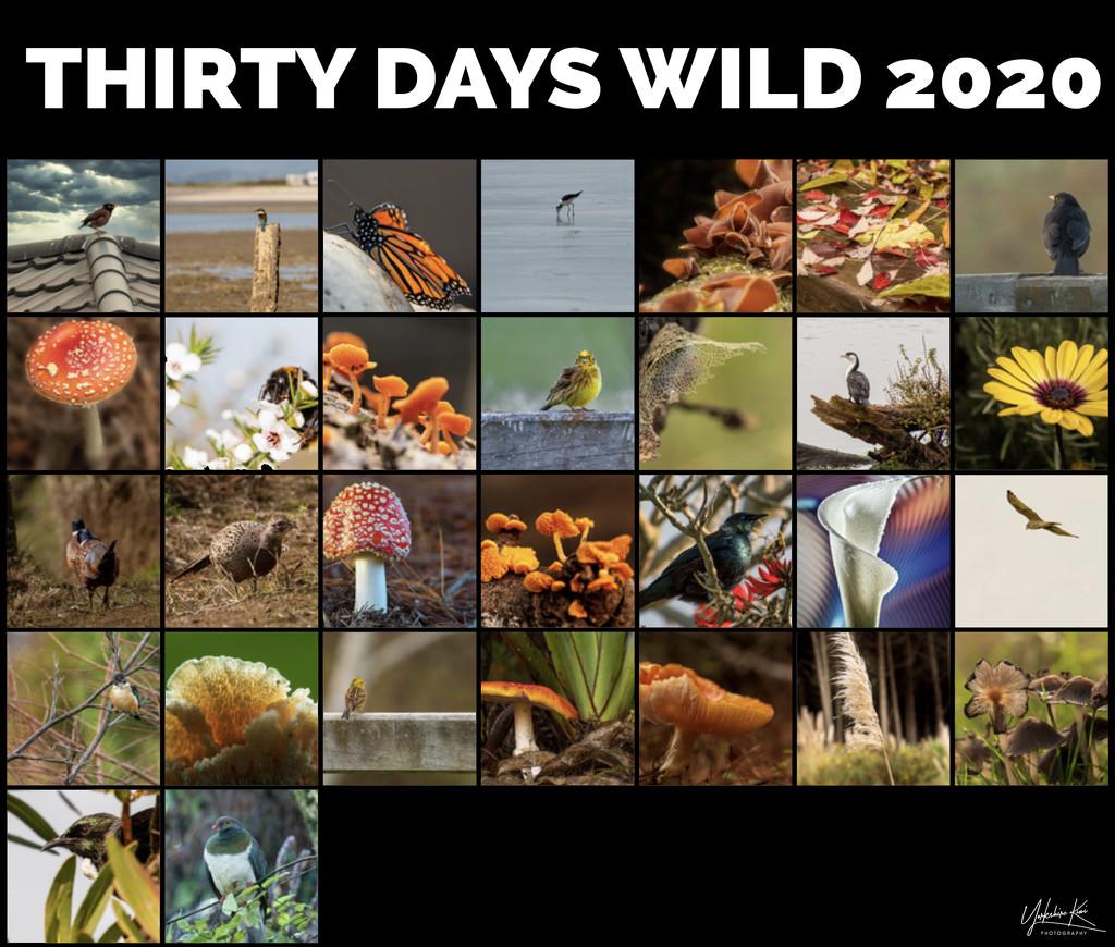 30 days wild 2020 by yorkshirekiwi
