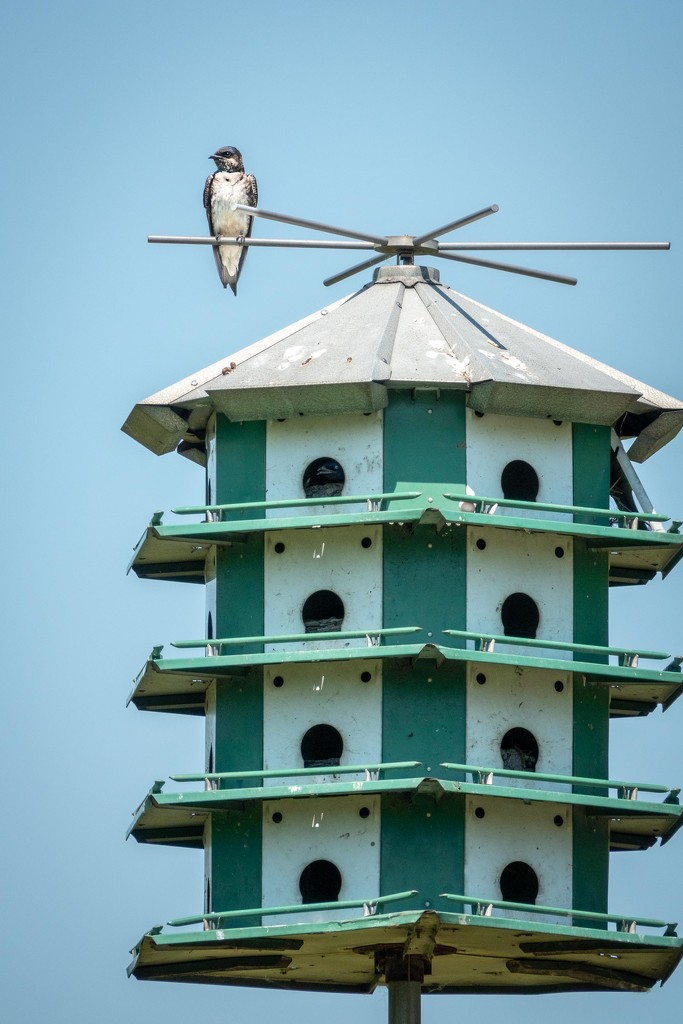 The Swallow and His Mansion by jyokota